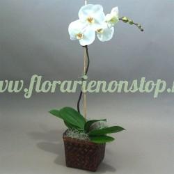 Orhidee la ghiveci alba Phalaenopsis
