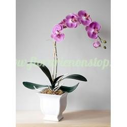 Orhidee mov comanda online ieftina