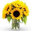 Buchete cu floarea soarelui