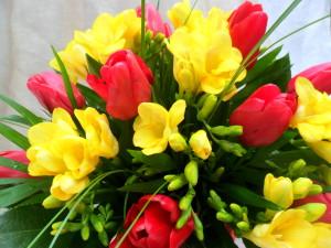 frezii-lalele-florarie-online-cluj-napoca