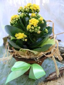 kalanchoe-planta-ghiveci-cu-flori-livrare-la-domiciliu-cluj-florarie-online