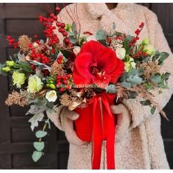 Cutie de iarna Red Amaryllis